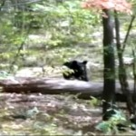 Hiker Took Pictures of Bear Before It Killed Him
