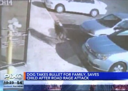 Family dog saves owners from gunfire during road rage incident