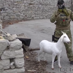 Exploding Goat Decoys aka IEG's Used Agains ISIS