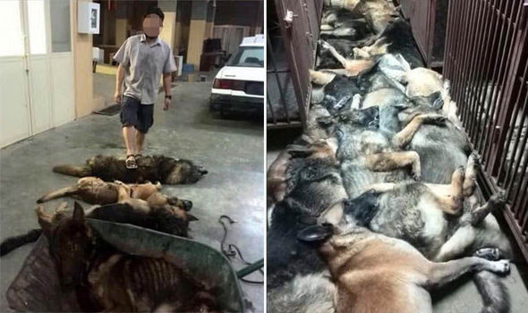 Eastern Securities Slaughters 40+ Working Dogs.
