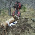 Hunter impaled by antler of elk he just killed
