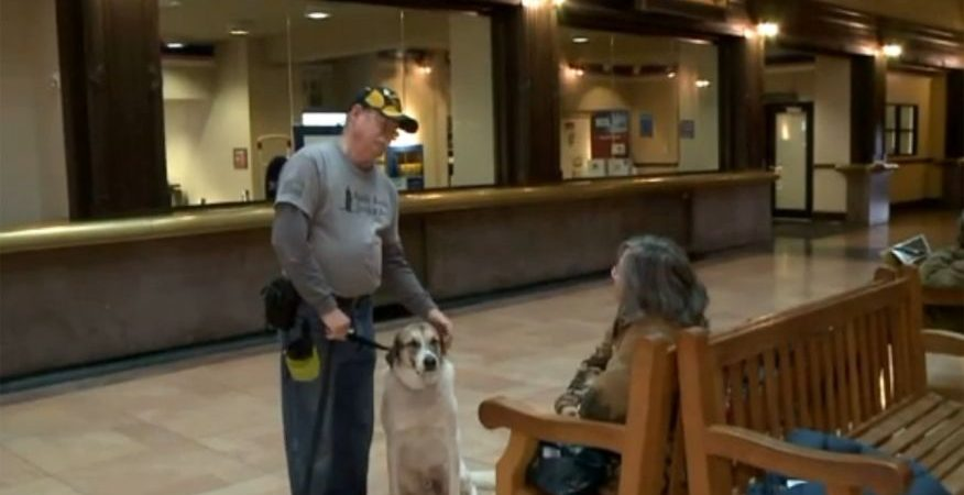 Veteran asked to leave post office because he didn't have his service dog's ID