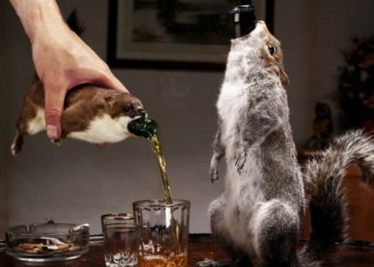 Worlds most strongest beer sold in the body of a squirrel!