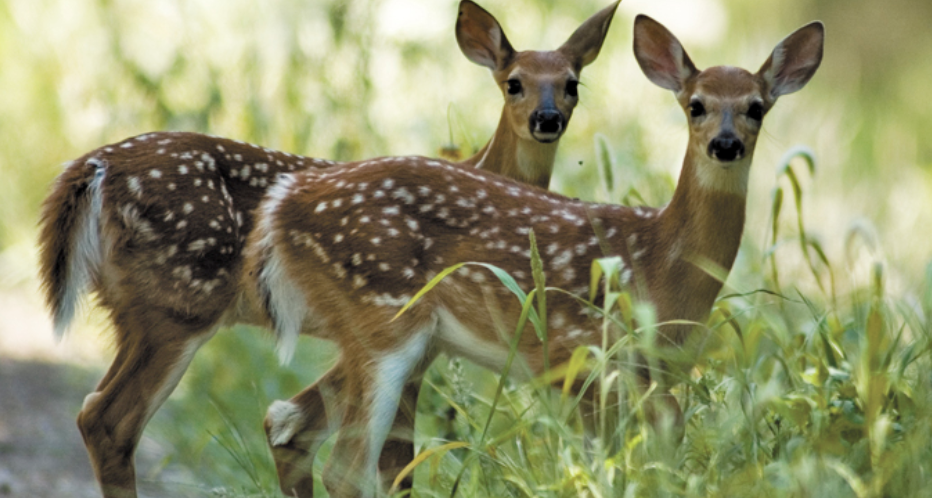 Michigan woman charged with caring for wildlife without permit, animals killed by state officials
